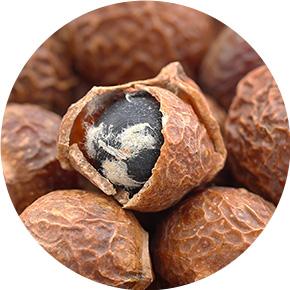 ソープナッツ